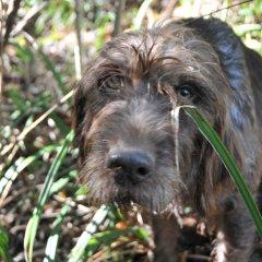 Black Truffle Hunting