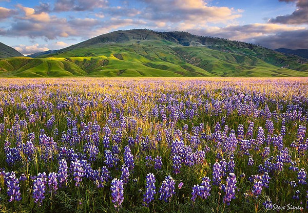 One of California's best wildflower displays.