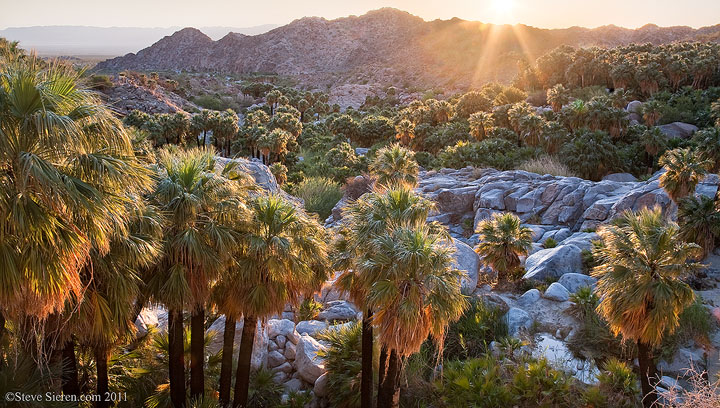 Natural palm oasis in Baja California