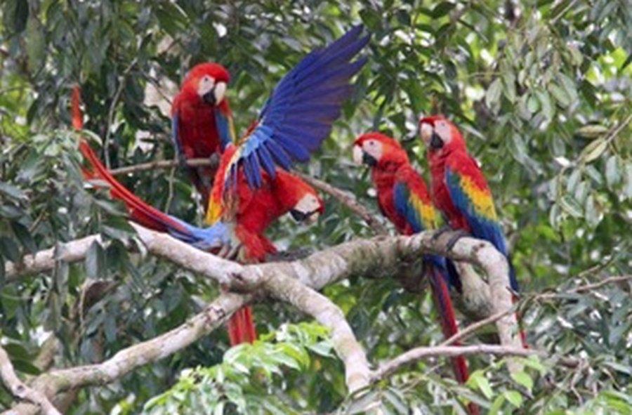 Sierpe Costa Rica Wildlife Tour