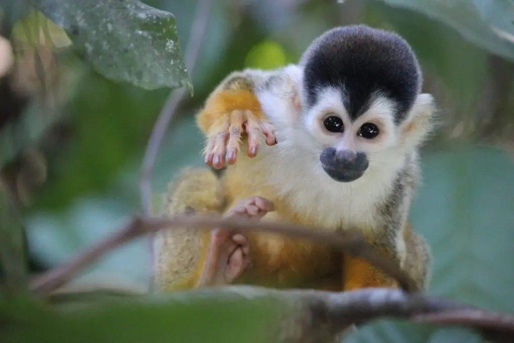Sierpe Mangrove tour Costa Rica