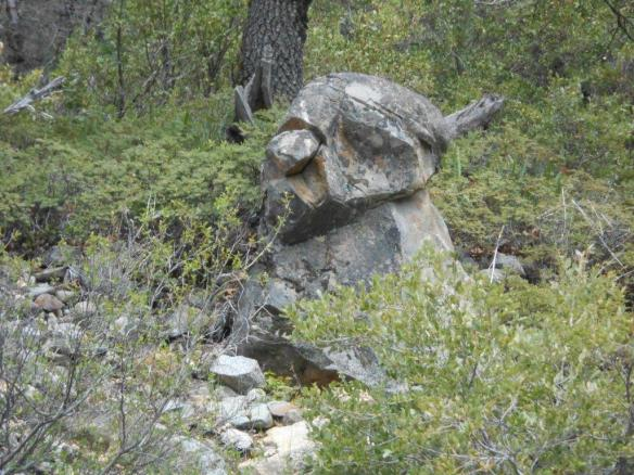 Deep within the Tahoe National Forest is an ancient Washoe carving (?). At least this is what Phil Cammack thinks..