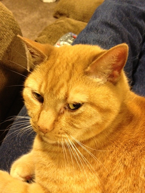 11/23/16 Yes, I'm grouchy... how come turkeys get all the glory at Thanksgiving... what about cats... what's wrong with us...