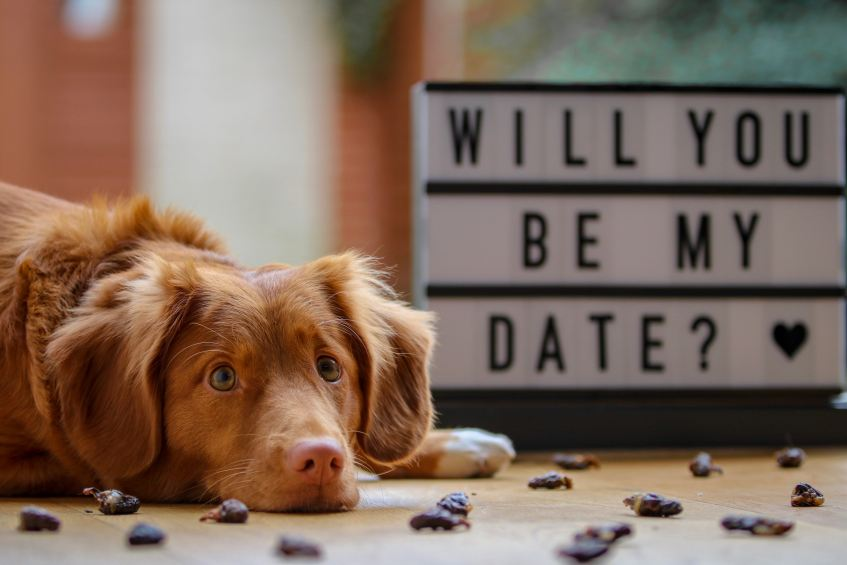 brown dog next to sign that say will you be my date?