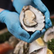Buckley Bay Oysters