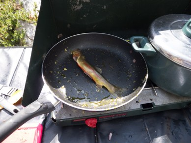 golden trout in the pan