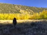 Rocktober in Rock Creek