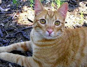 cat-olivia