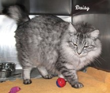 catdaisy