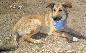 Ashley Collie Mix