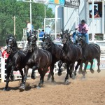 Photos courtesy Nicole Njos and Percheron Thunder