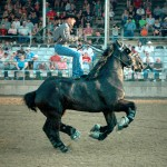 Percheron-Thunder2