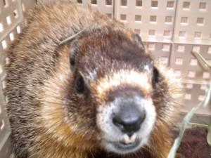 marmot 3