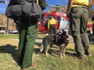 dog-teams-prepare-for-search-2