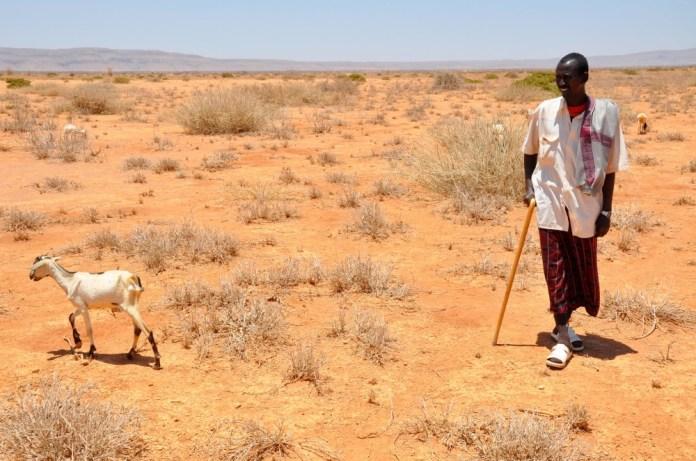 Shepherd in 2012 Somaliland