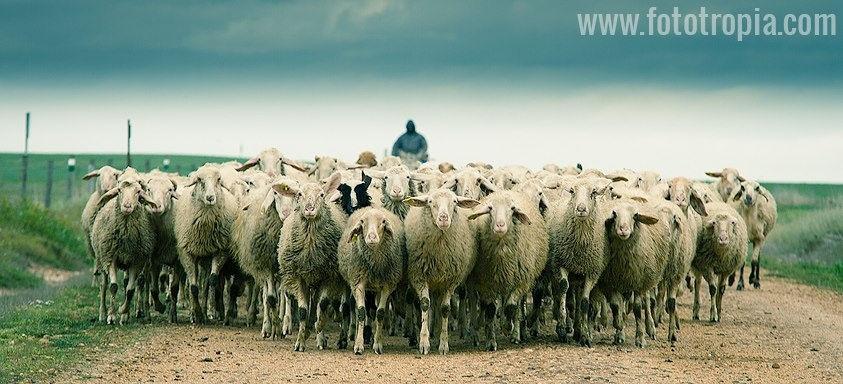El último pastor de La Salina
