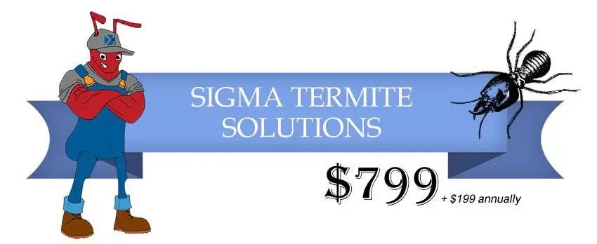 termite solutions
