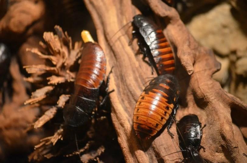 cockroaches-215544_1280