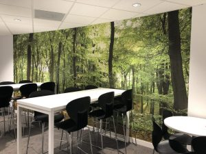 Audi Cantine Forest Wallpaper