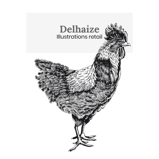 Delhaize illustrations retail