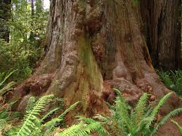 ejemplo de tronco de arbol, que le da nombre a este color