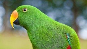 el plumaje de los loros da nombre a este color