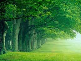 los bosques dan nombre a esta tonalidad del verde