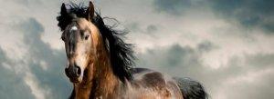 ▷ Sonhar com Cavalo -【Você não vai acreditar】