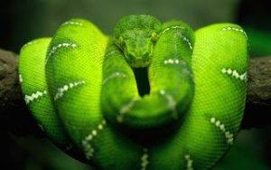 ▷ Sonhar com Cobra Verde【IMPERDÍVEL】