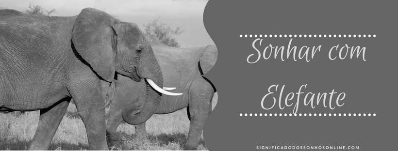 ▷ Sonhar com Elefante【INTERPRETAÇÕES REVELADORAS】