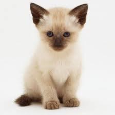▷ Significado dos sonhos gato【IMPERDÍVEL】
