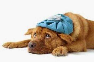 ▷ Sonhar com Cachorro Doente【Interpretações Reveladoras】