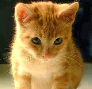 ▷ O que significa sonhar com gato【IMPERDÍVEL】