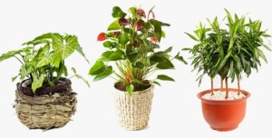 ▷ Sonhar com plantas【IMPERDÍVEL】
