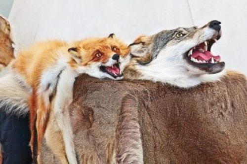 animais empalhados