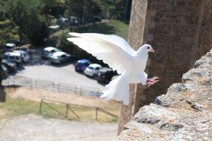 Orações do Espírito Santo – Conheça e reze, diariamente, a oração ao Espírito Santo