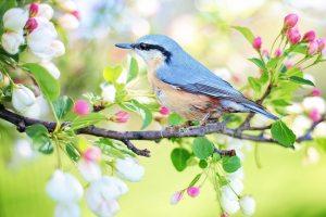 26 Frases Sobre a Natureza e a Vida