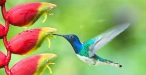 9 Mensagens Da Vida Que Os Beija-flores Nos Enviam