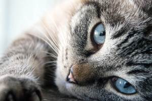 Por Que Os Gatos São Protetores Da Casa Contra Fantasmas e Energias Negativas?