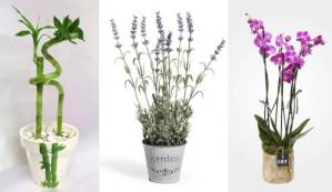 6 Plantas Que Irão Espalhar Energia Positiva Dentro De Sua Casa