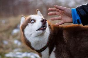 Cientistas Confirmam Que Cães Podem Realmente Sentir As 'Pessoas Ruins'
