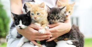 ▷ Sonhar com ninhada de gatos 【Você precisa saber o significado】