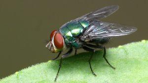 Qual o significado espiritual de ter moscas em casa? O motivo vai te surpreender