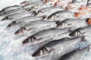▷ Sonhar Comprando Peixe 【É mau presságio?】