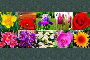 Escolha uma flor e descubra informações muito secretas sobre você!