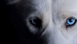 Você sabia? Seu animal de estimação pode afastar espíritos negativos de sua casa!