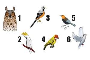Escolha um pássaro e receba uma mensagem para seu dia