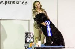 Puppy BIS, Black Terrier