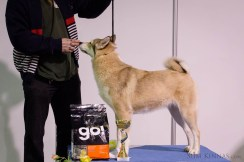 Group 5, 3rd place, West-Siberian Laika