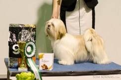 Junior BIS, 4th place, Lhasa Apso